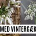 Vintergækker, Nydnuet.dk